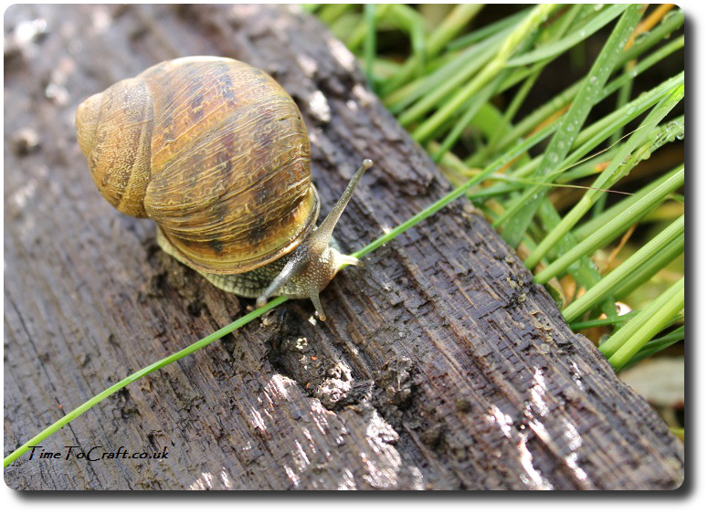 snail-after-the-rain